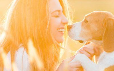 Traitement anti puce pour chien : tout ce que vous devez savoir