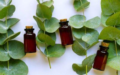 L'huile essentielle d'Eucalyptus radié: un must-have !