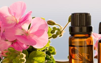 L'huile essentielle de géranium : l'aide aux bobos du quotidien, mais pas que…