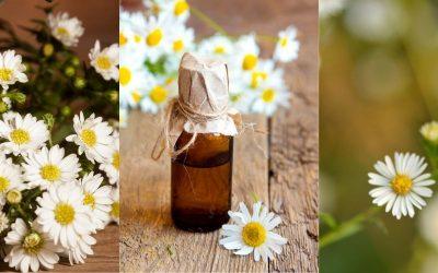 L'huile essentielle de camomille romaine et ses bienfaits