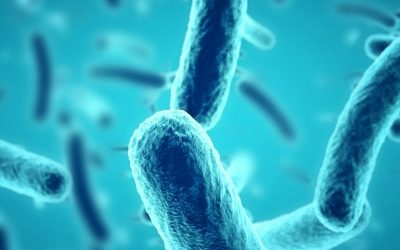 Le microbiote